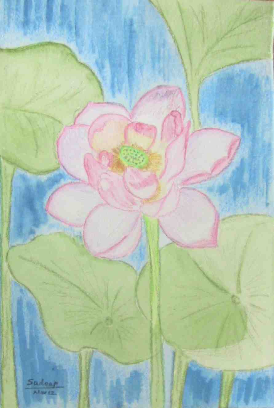 Water Color Painting of Lotus Flower